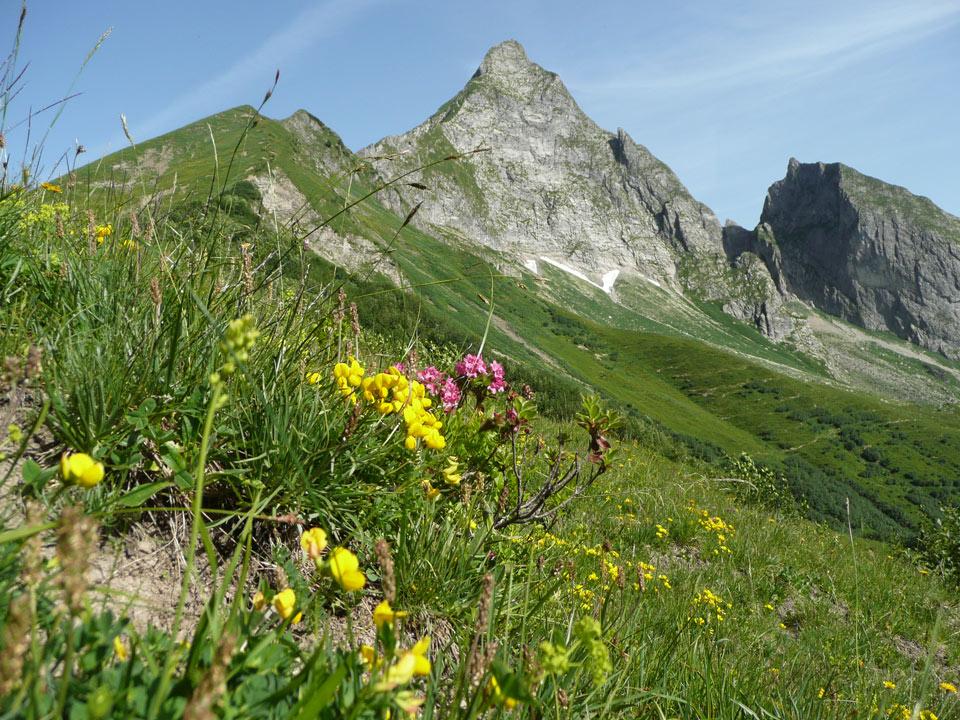 Tannheimer-Hof Berge Höfats